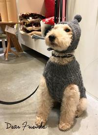 Hello Tubu !! - Doggie Do!! / good dog and hello cat !!