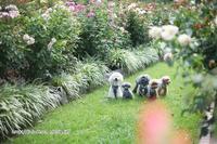 薔薇咲く公園 - My time...5人の天使と Ⅱ