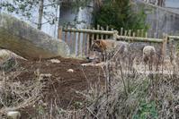 オオカミ弾 13 - 今日ものんびり動物園