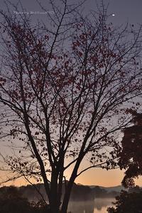 晩秋 桜の姿 @ 水上池  - 東大寺が大好き