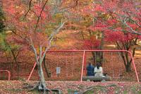 紅葉Diary**in 尾関山&今高野 - きまぐれ*風音・・kanon・・