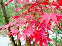 播磨の国の名古刹 一乗寺 - 十色生活