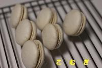 きな粉マカロン&ガトーショコラ - パン・お菓子教室 「こ む ぎ」