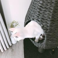 隠れ家好きニャンコベッド@catry - necoとシンプルインテリア