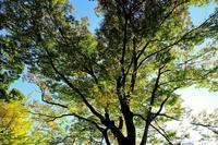 日比谷公園 - くろちゃんの写真