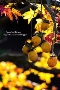 干し柿の里 - *花音の調べ*
