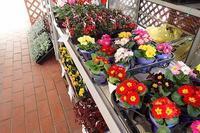 『第27回ひめじ植木いち』に出店します!!(^^)v - 手柄山温室植物園ブログ 『山の上から花だより』