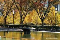和田倉門噴水公園の黄葉と噴水のコラボ(^^♪ - 自然のキャンバス