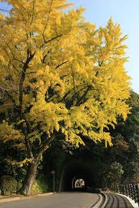 秋深し - 信仙のブログ