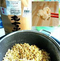 めずらしい、新米のモチ米の玄米をゲット - ピースケさんのお留守ばん