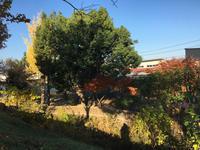 山の子保育園 剪定工事 - 三楽 sanraku 造園設計・施工・管理 樹木樹勢診断・治療