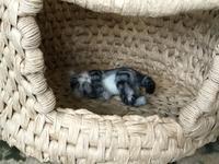 猫ちぐら - 杉本創作人形&3ニャンズ