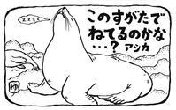 気になる生物④《アシカの格好》 - 絵本作家 井川ゆり子 と その夫の日々
