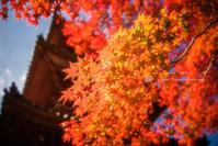 太山寺の紅葉 - ぽとすのくずかご
