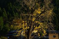 黄葉その後 - デジタルで見ていた風景