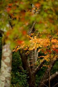 秋色....『始めました・・・』 - 気ままに写生活