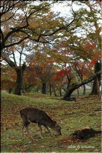 ぶらり奈良 2 - 今日のいちまい