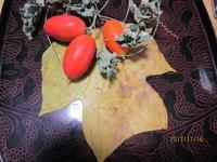 初・カラスウリ、アシタカジャコウソウ - 宮迫の! ようこそヤマボウシの森へ