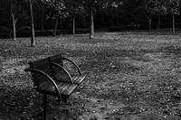 この秋もボクは、こいつと落ち葉を踏んで、毎日ここを歩いたのだった。 - Yoshi-A の写真の楽しみ