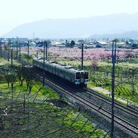 花電車 - Snapshot