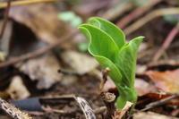 もうすぐ小雪:大豆を収穫しました。 - 週刊「目指せ自然農で自給自足」