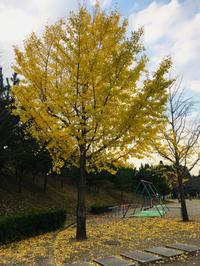紅葉が見頃ですね - 川豊本店ブログ