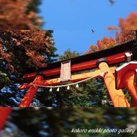 「398段と紅葉」新倉山浅間公園 - こころ絵日記
