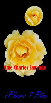 薔薇 マダム シャルル ソバージュ iPhone7、8 - 写真と画像 Illustrator&Photoshopで楽しんでます! ネイル画像!