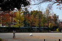 ご近所の紅葉 「馬橋公園」 - Genie