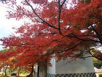 城上神社の紅葉とNW - 清治の花便り