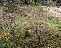 2階からお花見 - 金沢犀川温泉 川端の湯宿「滝亭」BLOG