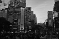渋谷三景 - S w a m p y D o g - my laidback life