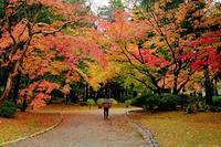 晩秋(弥彦公園) - くろちゃんの写真