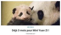 ボーヴァルのパンダと上野のパンダ - ときどき日誌 sur NetVillage