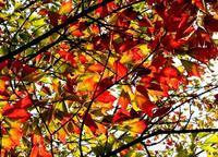 赤と緑と黄色 - 散歩日和