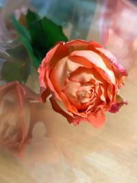 誕生日の花 - TeRa Life