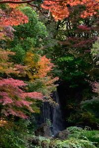 万博記念公園紅葉 - 高原に行きたい