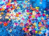 奥三河 吹雪のライズ - 弾丸Fisher 花よりライズ
