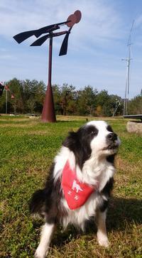 愛犬と秋を楽しむ有馬富士共生公園 - はばたけ MY SOUL