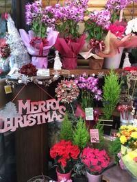 店頭模様替えしました★~クリスマス仕様~ - florist HANASHO staff room