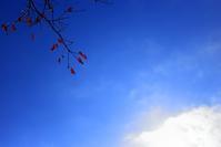 秋の終わり - 美は観る者の眼の中にある