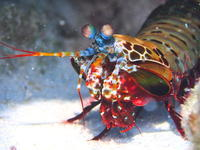 ヨスジの根(水納島)2017.9.23 - Travel&Diving