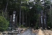 秋の森苔の森 - HAPPY to ...
