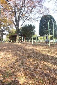 公園で、秋・発見。 - かいじゅうたちのいる我が家。