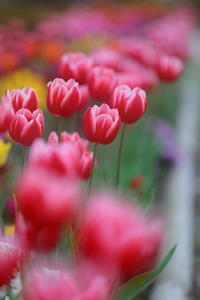 この花の温もりをあなたに - kzking1963 Digital Photo Diary