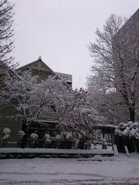 冬始まり、そして18周年祝! - 戻りガツオよ、何処へ行く