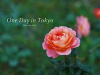 One Day in Tokyo秋バラ、元気に咲いてます♪ - Cucina ACCA(クチーナ・アッカ)