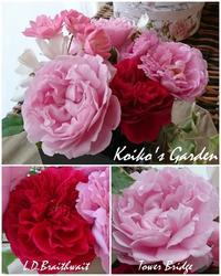 夏中放置、それでも咲いた強かな秋バラたち - 恋子のガーデニング日記