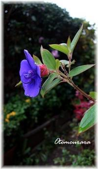 庭の花・・・ - 日々楽しく ♪mon bonheur