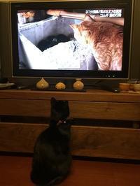 猫は猫が好き - いちじく日記*てんかんをご存知?*